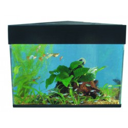LFA081 Stained Glass Set 1 Lady Bug